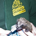 a baby hedgehog been fed