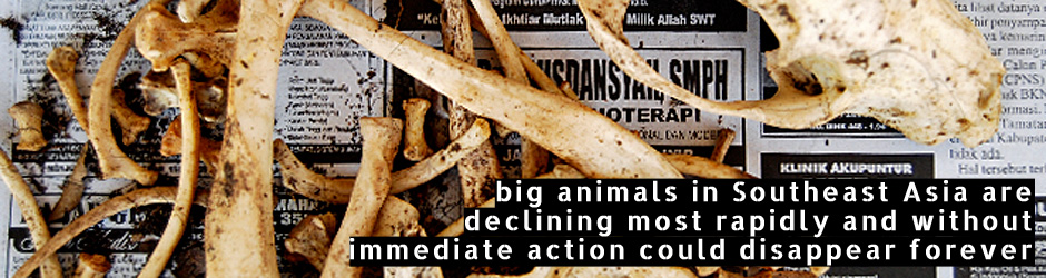 SWCC - EAZA - South East Asia Campaign - big animals in Southeast Asia are declining most rapidly and without immediate action could disappear forever