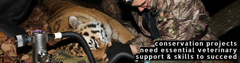 SWCC supporting Wildlife Vets International - conservation projects need essential veterinary support and skills to succeed